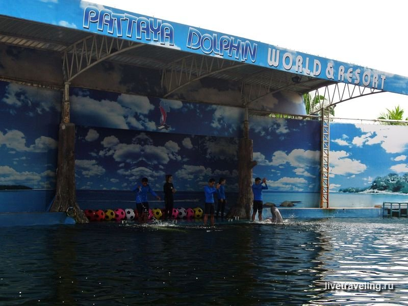 Дельфинарий в Паттайе. Pattaya Dolphin World & Resort