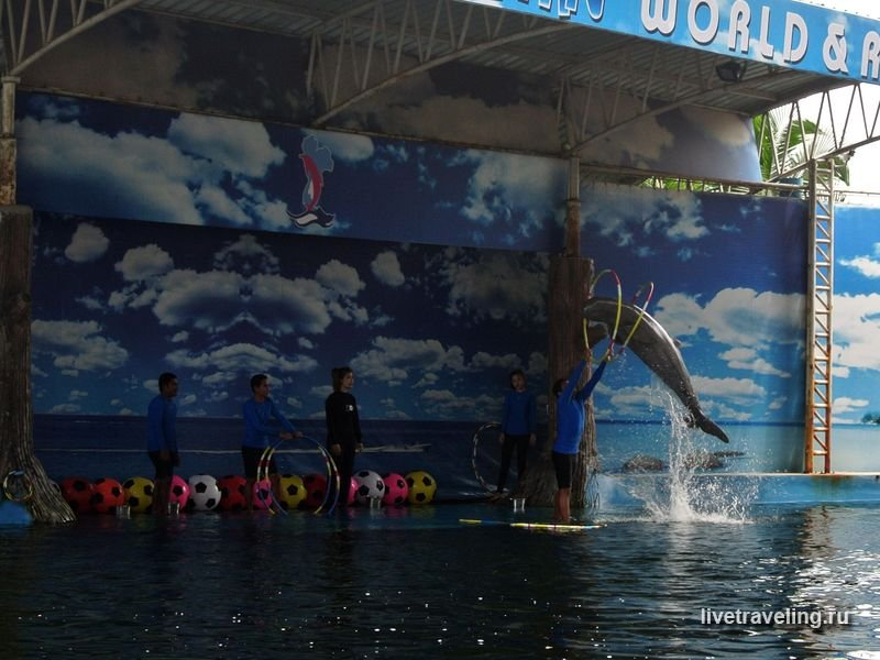 dolphin-world-pattaya-06
