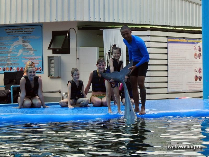 Дельфинотерапия. Дельфинарий в Паттайе. Pattaya Dolphin World & Resort